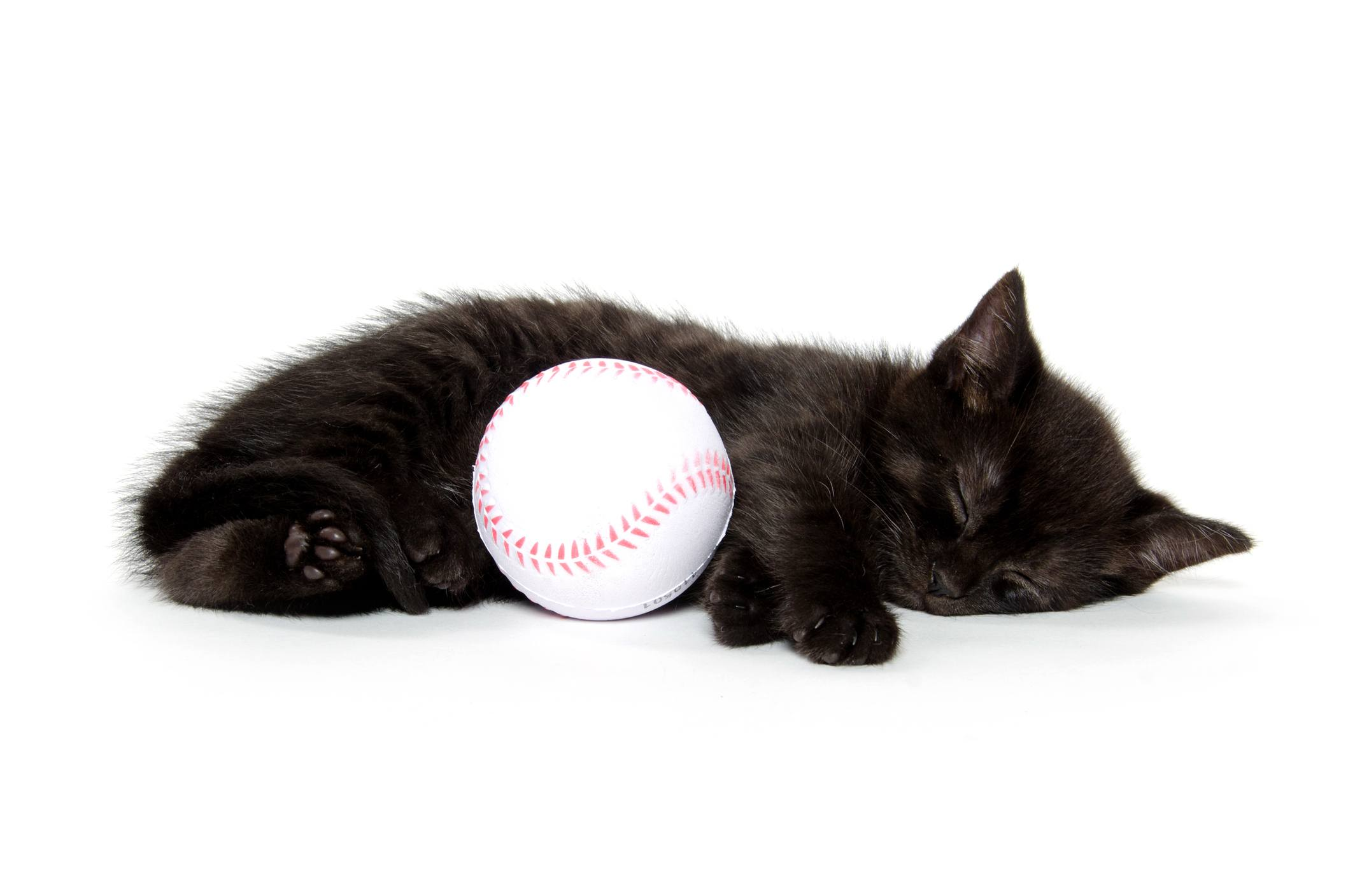 American shorthair black kitten sleeping with baseball