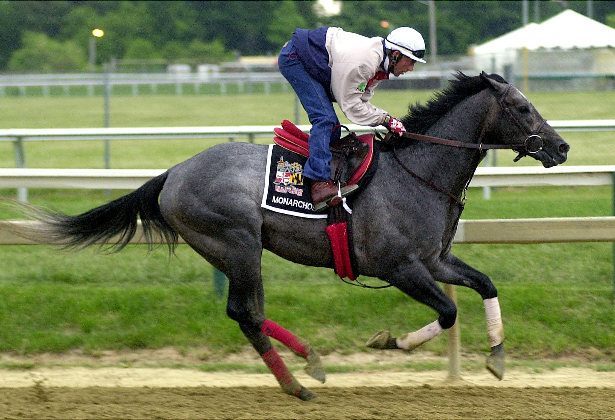 Bryan Beccia, exercise rider, takes the Kentucky Derby winner, Monarchos, for a gallop