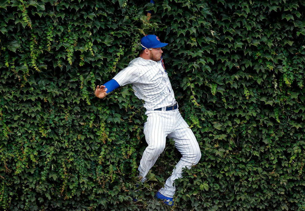 Ian Happ in the outfield ivy at Wrigley Field