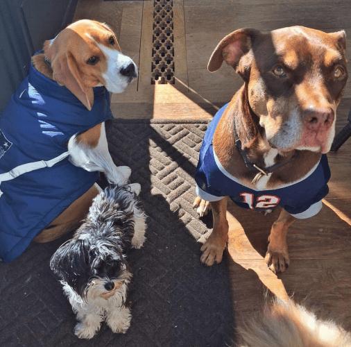 Brady family dogs