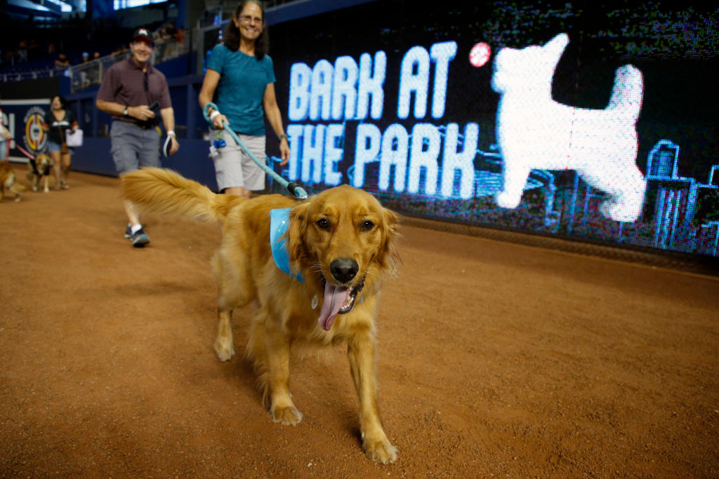 Fans parade their dogs on the field during the Miami Marlins' Bark at the Park day