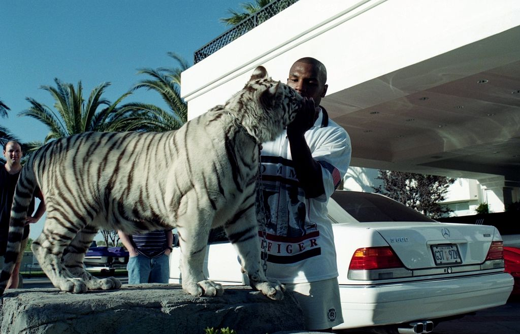 Mike Tyson spent a pretty penny on his tigers, including $250,000 after one of the cats attacked a woman.
