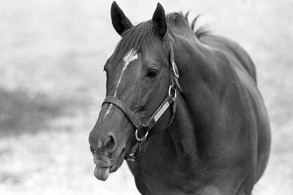 Secretariat Might Be the Most Honored Sports Icon in America